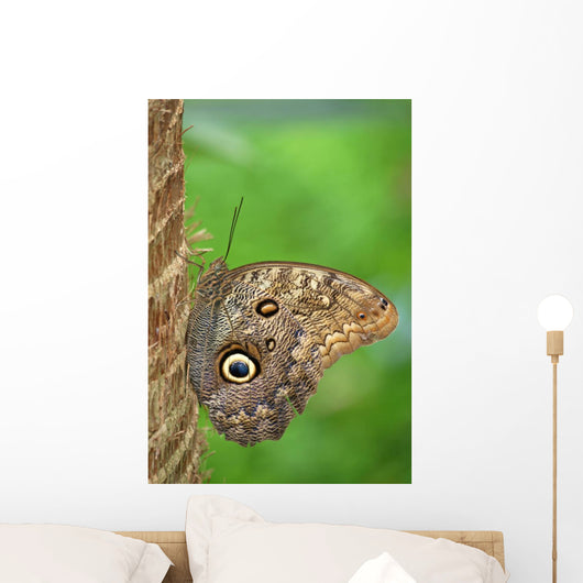 Owl Butterfly Wall Mural
