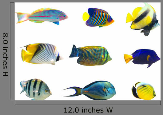 Tropical fish collection on white background Wall Decal