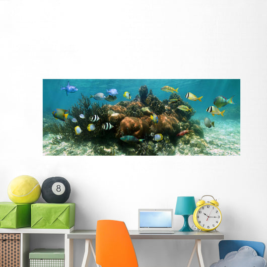 Underwater Panorama Coral Reef