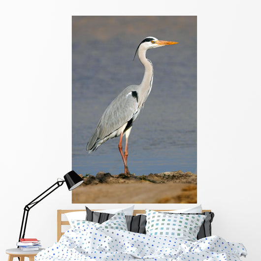 Grey Heron Ardea Cinerea Wall Mural