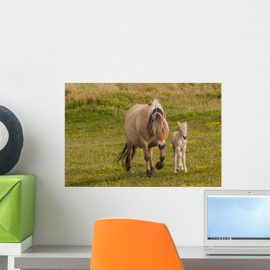 Breed Foal Fjord to Wall Mural