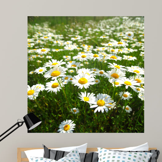 Field with White Daisies