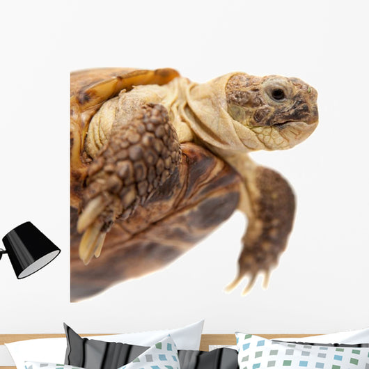 Russian Tortoise or Central Asian Tortoise Wall Decal