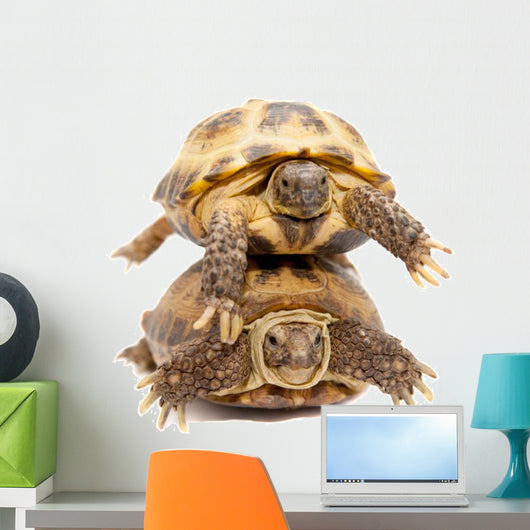 Pair of Russian Tortoises or Central Asian Tortoises Wall Decal