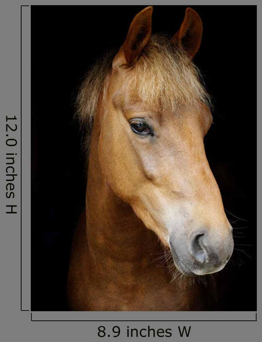 Pony Head Shot