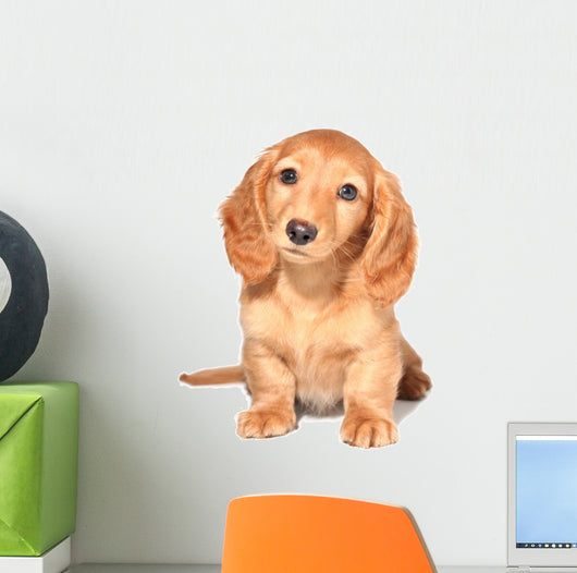Dachshund Puppy Wall Decal