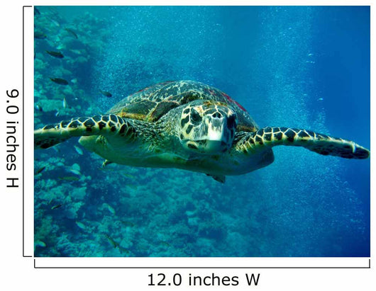 Turtle Underwater Wall Mural