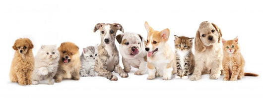 Group of Puppies фтв kitten of different breeds, cat and dog Wall Decal