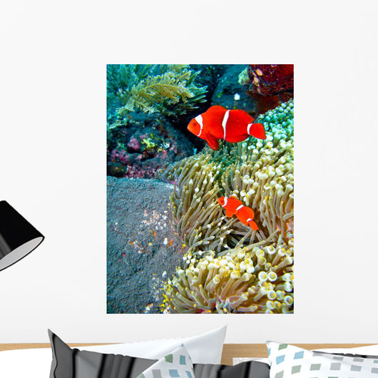 Red Clownfish Wall Mural