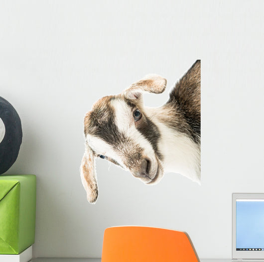 baby goat head Wall Decal