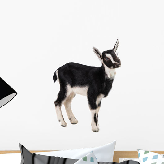little goat Wall Decal
