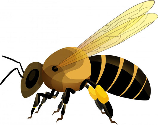 Bee Vector Illustration Wall Decal