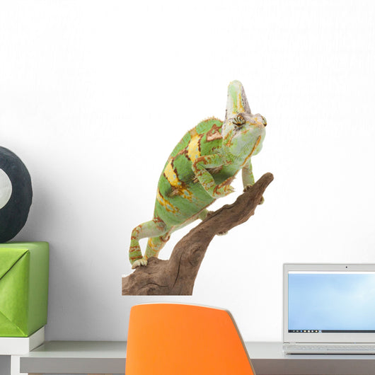 Veiled Chameleon Wall Decal