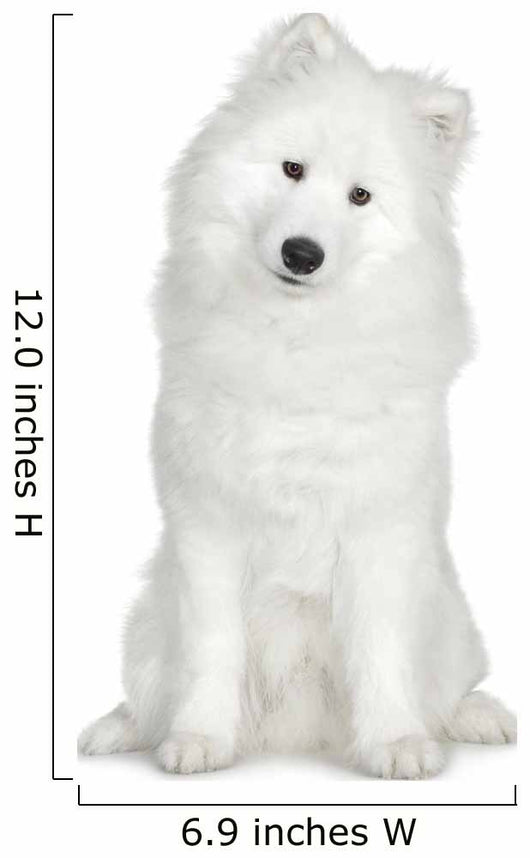 Samoyed  (6 months) Wall Decal