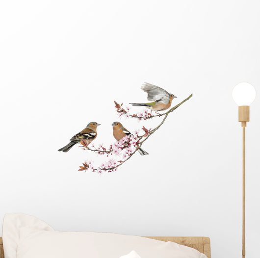 Chaffinch Cherry Blossoms Wall Decal