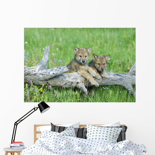 Gray Wolf Cubs Palying on Fallen Log Wall Mural
