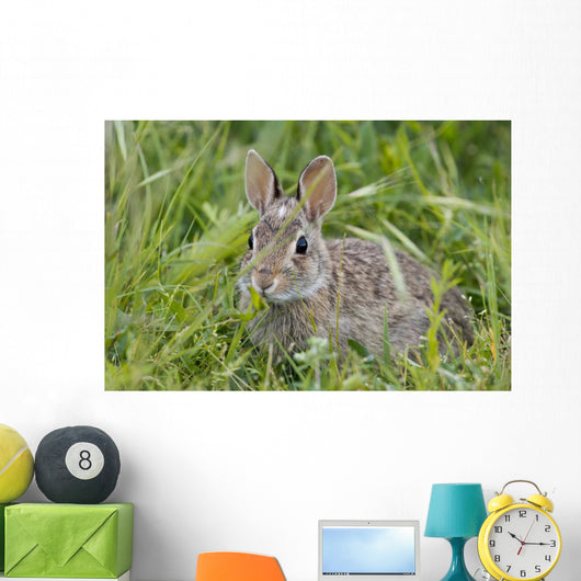 Wild Rabbit Looking You Wall Mural