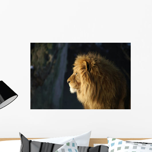 Lion Wall Mural