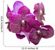 Purple orchid isolated Wall Decal