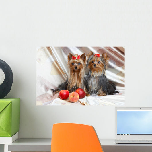 Yorkshire Terriers Wall Mural