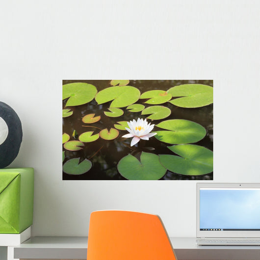 White water lily Wall Mural
