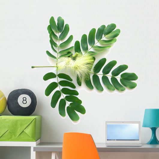 Leaf and Flower of Acacia Lebeck Wall Decal