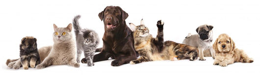 Group Cats and Dogs
