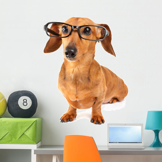 Dachshund dog with glasses Wall Decal