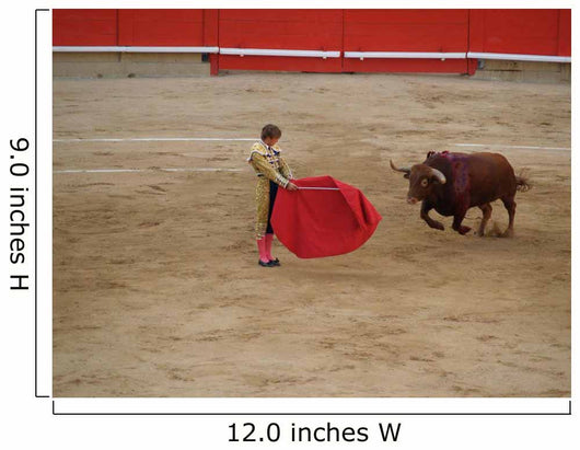 The Bull and Bullfighter