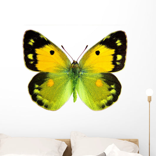 Clouded Yellow Butterfly Wall Decal