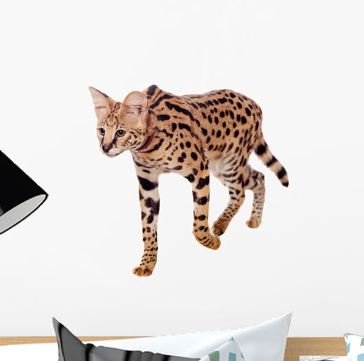 Beautiful Serval Cat Wall Decal