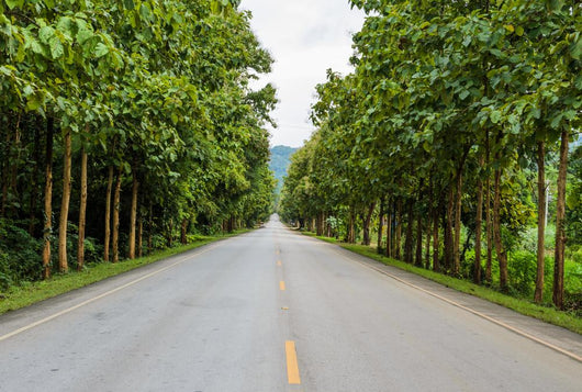 Countryside road with Teak trees Wall Mural