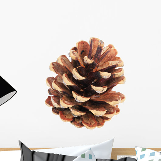 Beautiful Pine Cone Isolated on White