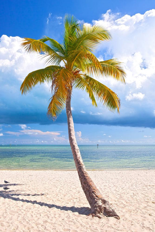Summer at a tropical paradise in Florida Keys, USA