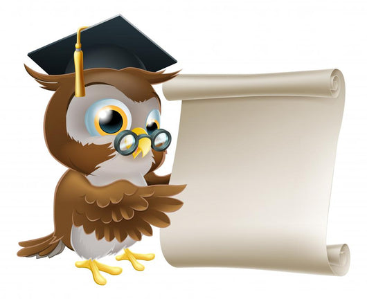 Owl With Scroll Document Wall Decal