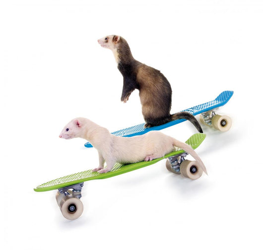 Ferrets Riding Skateboards Wall Decal