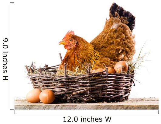 Chicken with eggs isolated on white