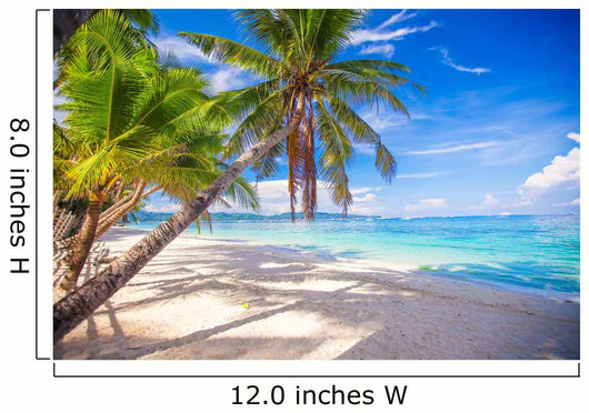 Coconut Palm tree on the white sandy beach Wall Mural