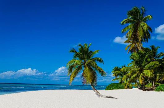 Tropical sandy beach with palm trees, Dominican Republic