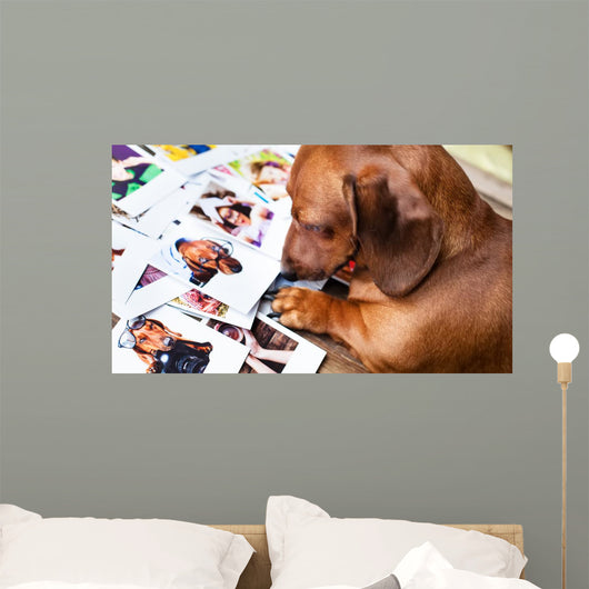Cute dog among the photos Wall Mural