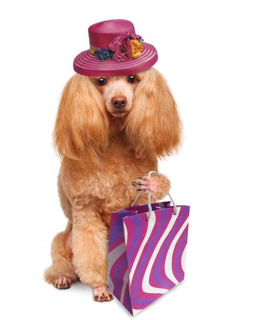 Funny Dog With Shopping Bags