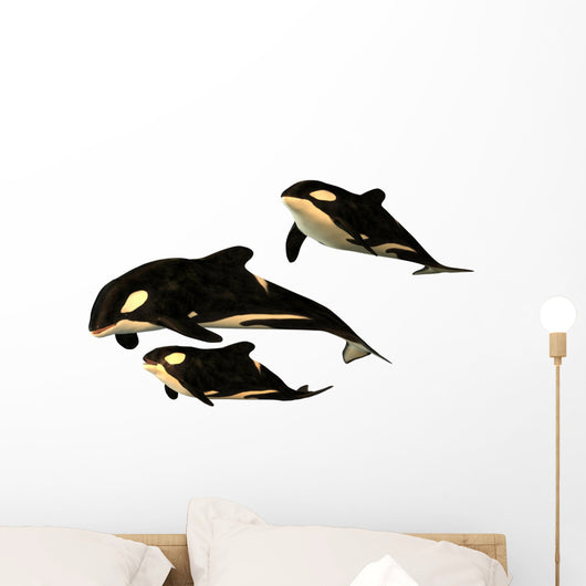 Killer Whale Wall Decal