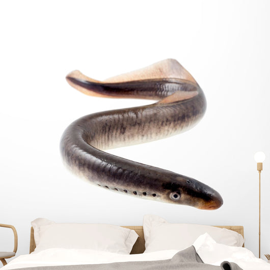 Lamprey Fish Wall Decal