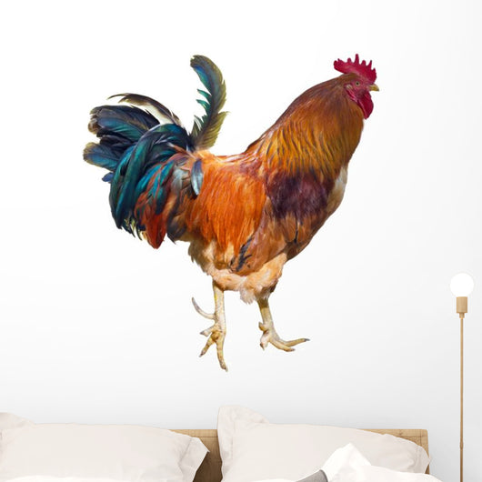 Rooster with Spurs
