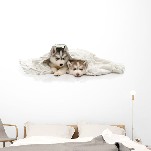 Cute Puppy with a White Blanket Wall Decal