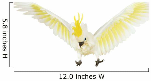 Sulphur-crested Cockatoo White