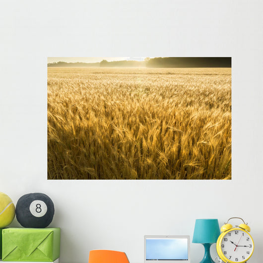 Misty Sunrise Over Golden Wheat Field in Central Kansas Wall Mural