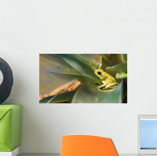 Golden Poison Dart Frog Wall Mural