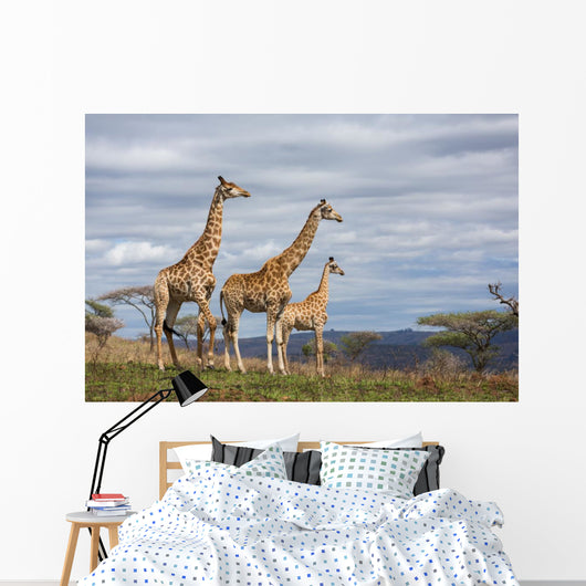 giraffes in game reserve Wall Mural