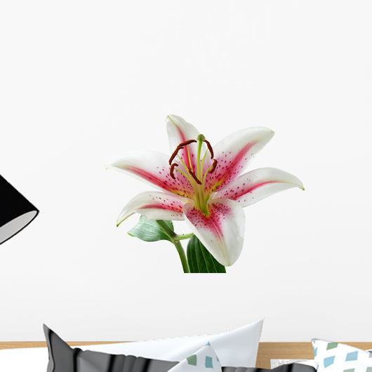 white and pink lily with brown pollen Wall Decal